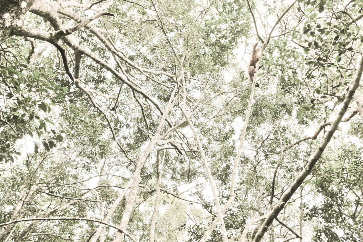 Vanish, 2014, Pigmentprint, 40cmx60cm