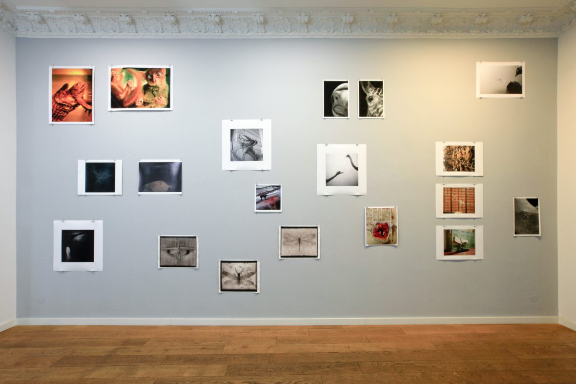 WILD - Animals in Contemporary Photography, 2014, Alfred Erhardt Stiftung, Berlin