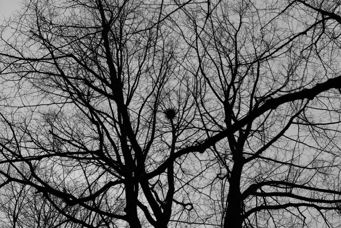 Nest, 2008/2020, Pigmentprint, 40x60cm